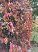 Rīgas parki un dārzi pārklājas rudens zeltā 18