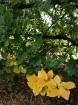 Rīgas parki un dārzi pārklājas rudens zeltā 19