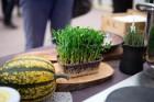 Lai stiprinātu esošās un radītu jaunas putras ēšanas tradīcijas, Starptautiskajā Putras dienā Rīgas centrā vēra vaļā Simtgades putras vēstniecību 6