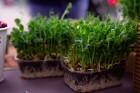 Lai stiprinātu esošās un radītu jaunas putras ēšanas tradīcijas, Starptautiskajā Putras dienā Rīgas centrā vēra vaļā Simtgades putras vēstniecību 9