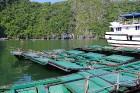 Travelnews.lv ar vjetnamiešu laivu Halongas līcī apciemo savvaļas pērtiķus. Sadarbībā ar 365 brīvdienas un Turkish Airlines 25