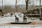 Ērgļu pils teritorija ir vērā ņemams tūrisma un apskates objektu papildinājums, kas priecēs viesus ar savādāku Ērgļu panorāmu no jaunizveidotās lapene 1