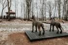 Ērgļu pils teritorija ir vērā ņemams tūrisma un apskates objektu papildinājums, kas priecēs viesus ar savādāku Ērgļu panorāmu no jaunizveidotās lapene 15
