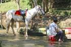 Travelnews.lv Vjetnamā apmeklē Prennas ūdenskritumu ceļā no Muine uz Dalatu. Atbalsta: 365 brīvdienas un Turkish Airlines 42