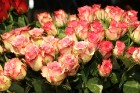 Prāmju kompānija «Tallink Grupp» uz «Romantika» klāja svin 30 gadu jubileju un 13 gadus Latvijā 64