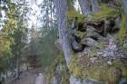 Rīgas kalna takas rotātas sakņu mezgliem un gleznainiem skatiem uz krietni zemāk esošo upīti. visitligatne.lv 8