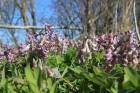 Pavasaris skarbākajā Igaunijas krastā. 19