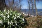 Pavasaris. 21
