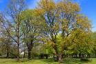 Travelnews.lv 4. maija – Latvijas Republikas Neatkarības atjaunošanas dienu svin Dobelē 30