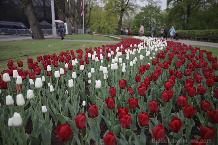 Ar svinīgiem koncertiem, militāro parādi, kopīgu pulcēšanos pie balti klātiem galdiem sestdien Latvijā un citviet pasaulē plaši tika svinēta Latvijas