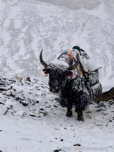 Tūroperatora Alida Tūrs valdes priekšsēdētājs Arno Ter-Saakovs piepildījis savu sapni un sasniedzis pasaules augstāko virsotni Everestu 254661