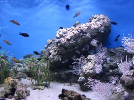 komentārs: Barselonas akvarijs avots: www.travelnews.lv 14167