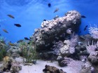 komentārs: Barselonas akvarijs avots: www.travelnews.lv 23