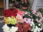 komentārs: ziedi avots: www.travelnews.lv 14