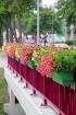 Travelnews.lv apmeklē Kurzemes sakoptāko ostas pilsētu Ventspili 23