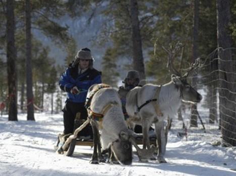 avots: www.imagebank.sweden.se 14449
