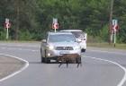 Travelnews.lv izbrauc Gruzijas autostrādes, kalnu asfalta ceļus un vēro dažādos žogu vārtus 34