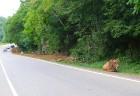 Travelnews.lv izbrauc Gruzijas autostrādes, kalnu asfalta ceļus un vēro dažādos žogu vārtus 35