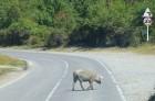 Travelnews.lv izbrauc Gruzijas autostrādes, kalnu asfalta ceļus un vēro dažādos žogu vārtus 36