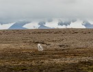 Latvijas Universitātes zinātnieki atgriezušies no ekspedīcijas Svalbāras arhipelāgā, kur tie pētīja ledājus un vides piesārņojumu vietā, kuru no Zieme 54