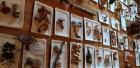 Sēņu dienas apmeklētāji varēja iepazīties ar ēdamām, indīgām un aizsargājamām sēnēm, veidot sēnes, salikt puzles un uzzināt par sēnēm piemērotām dzīvo 19