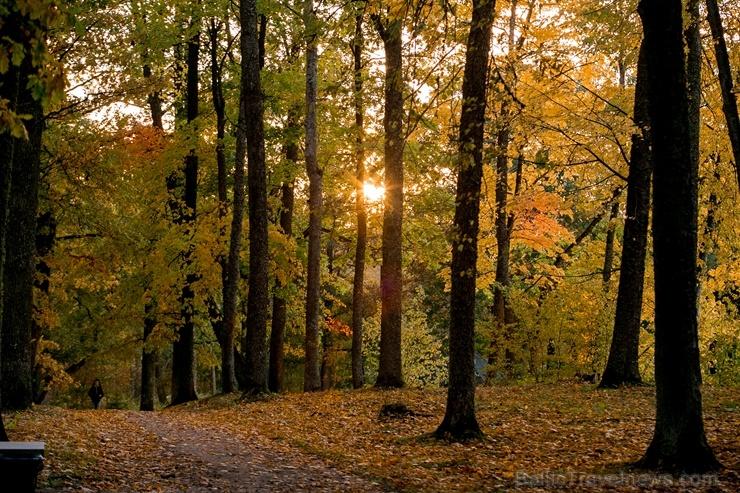 Lai arī šķiet, ka rudens tikai nupat sācies, nepamirkšķināsim ne acu, kad koki būs klāti zeltā! Izbaudi šo gleznaino laiku Alūksnes pusē!