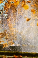 Lai arī šķiet, ka rudens tikai nupat sācies, nepamirkšķināsim ne acu, kad koki būs klāti zeltā! Izbaudi šo gleznaino laiku Alūksnes pusē! 4
