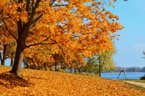 Lai arī šķiet, ka rudens tikai nupat sācies, nepamirkšķināsim ne acu, kad koki būs klāti zeltā! Izbaudi šo gleznaino laiku Alūksnes pusē! 17