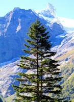 Travelnews.lv divas naktis nakšņo vienkāršā, bet viesmīlīgā Dombaja viesnīcā «Elbrus». Atbalsta: Magtur 31