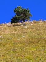 Travelnews.lv iepazīst Dombaja kalnus Kaukāzā. Atbalsta: Magtur 26