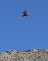 Travelnews.lv iepazīst Dombaja kalnus Kaukāzā. Atbalsta: Magtur 48