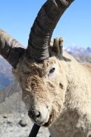 Travelnews.lv iepazīst Dombaja kalnus Kaukāzā. Atbalsta: Magtur 76