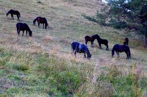 Travelnews.lv ar apvidus spēkratu «UAZ» dodas Kaukāza kalnu bezceļos. Atbalsta: Magtur 9