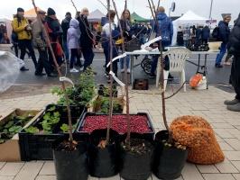 Rēzeknes Miķeļdienas gadatirgus pārsteidz iedzīvotājus un pilsētas viesus ar varenu tirgošanos, mielošanos, muzicēšanu, dejošanu un dižošanos