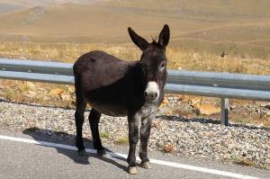 Travelnews.lv ar auto apceļo Kabarda-Balkārijas republiku Krievijā. Atbalsta: Magtur 48