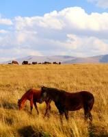 Travelnews.lv ar auto apceļo Kabarda-Balkārijas republiku Krievijā. Atbalsta: Magtur 68