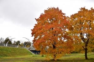 Ceļotājus Valmierā sagaida krāšņs rudens, kas ik dienu arvien vairāk rotā pilsētu 6