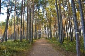 Valmieras pilsēta rotājas rudens zeltā 30