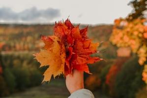 Sigulda var dižoties daudzveidīgām rudens ainavām pilsētā un tās apkārtnē 3