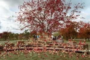 Jau astoto gadu Latvijas sulīgākais festivāls Dobelē pulcē novada un apkārtnes mājražotājus, stādaudzētājus, augļkopjus un interesentus 1