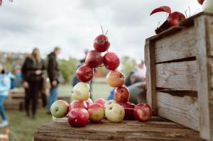 Jau astoto gadu Latvijas sulīgākais festivāls Dobelē pulcē novada un apkārtnes mājražotājus, stādaudzētājus, augļkopjus un interesentus 23