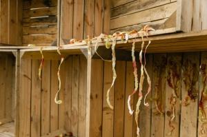 Jau astoto gadu Latvijas sulīgākais festivāls Dobelē pulcē novada un apkārtnes mājražotājus, stādaudzētājus, augļkopjus un interesentus 28