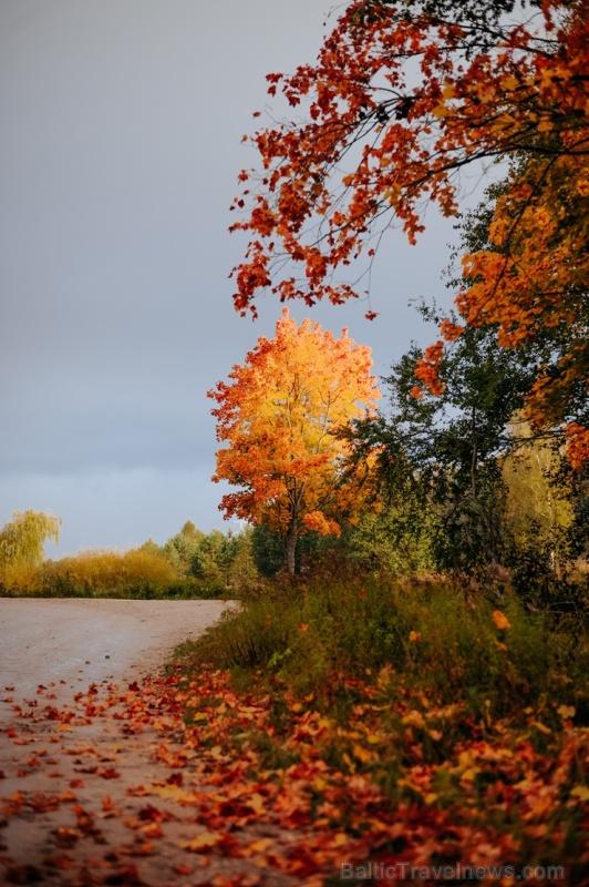 Tukumā rudenī valda īpaša noskaņa un krāsu spēles 267886
