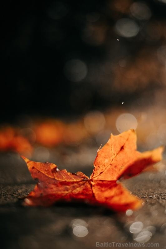 Tukumā rudenī valda īpaša noskaņa un krāsu spēles 267890