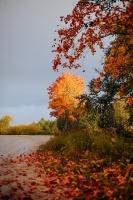 Tukumā rudenī valda īpaša noskaņa un krāsu spēles 2