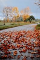 Tukumā rudenī valda īpaša noskaņa un krāsu spēles 3