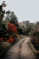Tukumā rudenī valda īpaša noskaņa un krāsu spēles 7