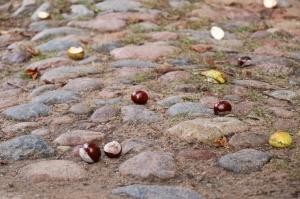 Tukumā rudenī valda īpaša noskaņa un krāsu spēles 17