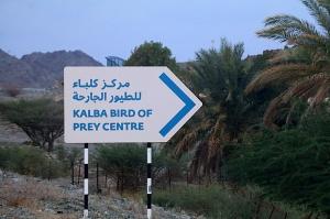 Travelnews.lv apmeklē plēsējputnu centru «Kalba Bird of Prey Centre» Šārdžas emirātā. Atbalsta: VisitSharjah.com un Novatours.lv 2
