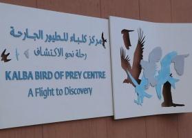 Travelnews.lv apmeklē plēsējputnu centru «Kalba Bird of Prey Centre» Šārdžas emirātā. Atbalsta: VisitSharjah.com un Novatours.lv 4